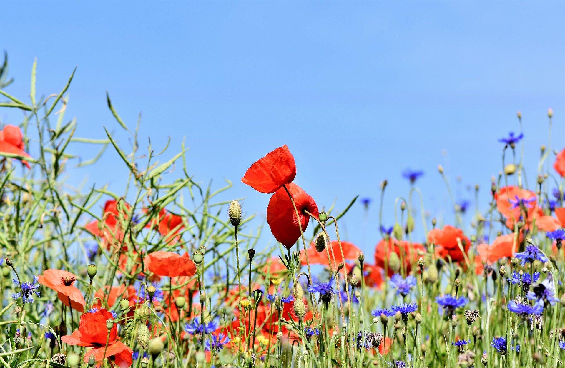 Die Pflanzendiversität des Graslandes wirkt sich auf die Futterqualität, den Ertrag und die Einkünfte aus