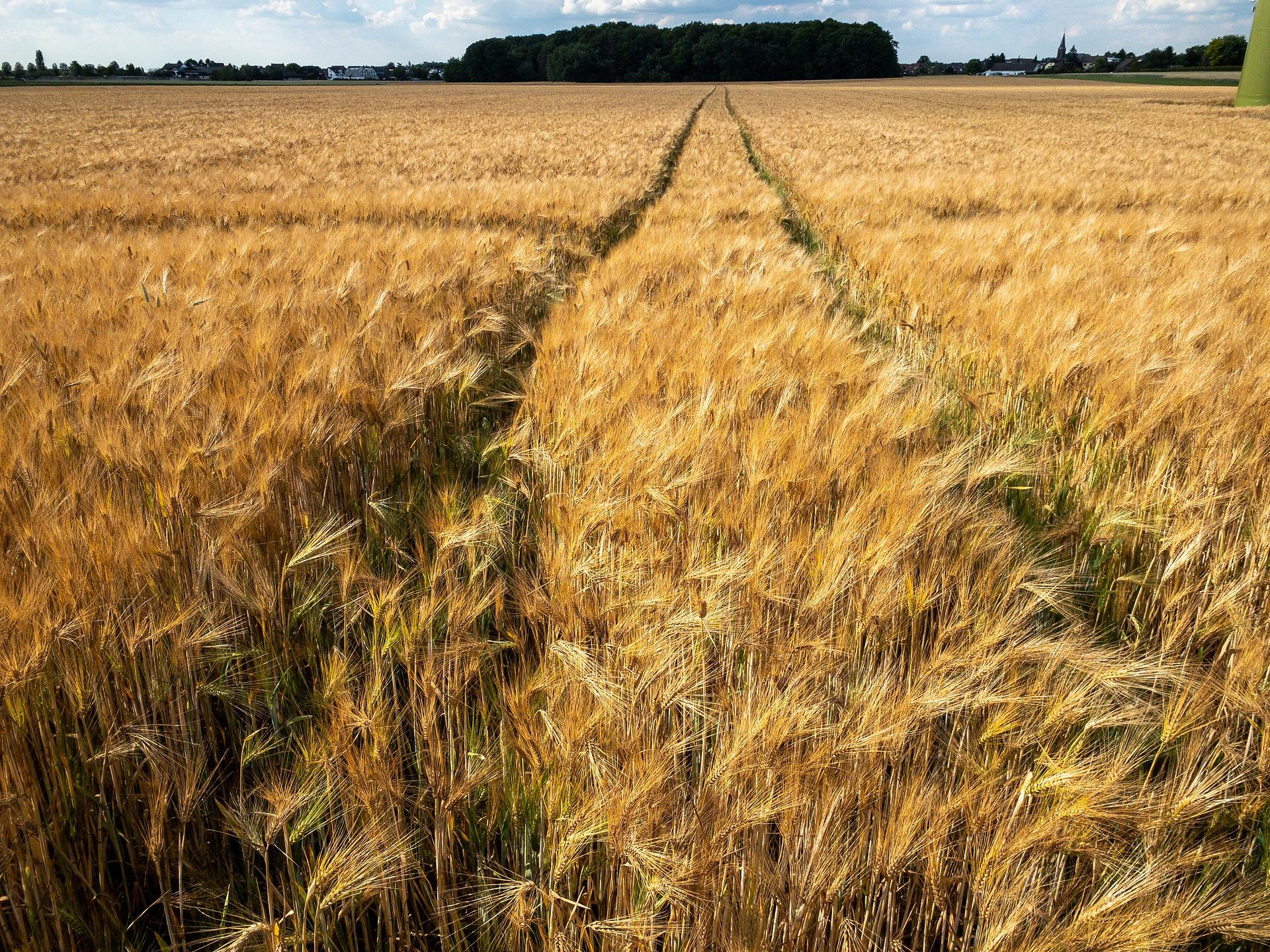 Agrarsubventionen 2019: Wer kriegt wie viel?