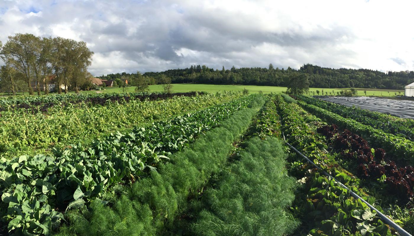 Die Zukunft der Landwirtschaft hat menschliche Dimensionen