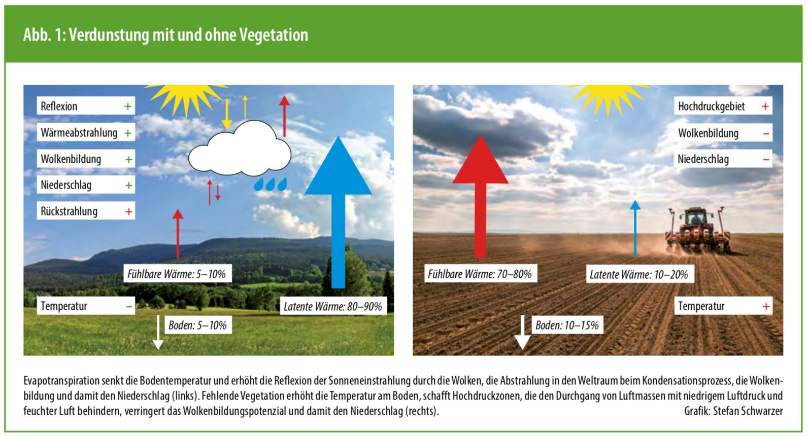 Artikel: Bedeckt die Böden! in der aktuellen Ausgabe von Ökologie & Landbau