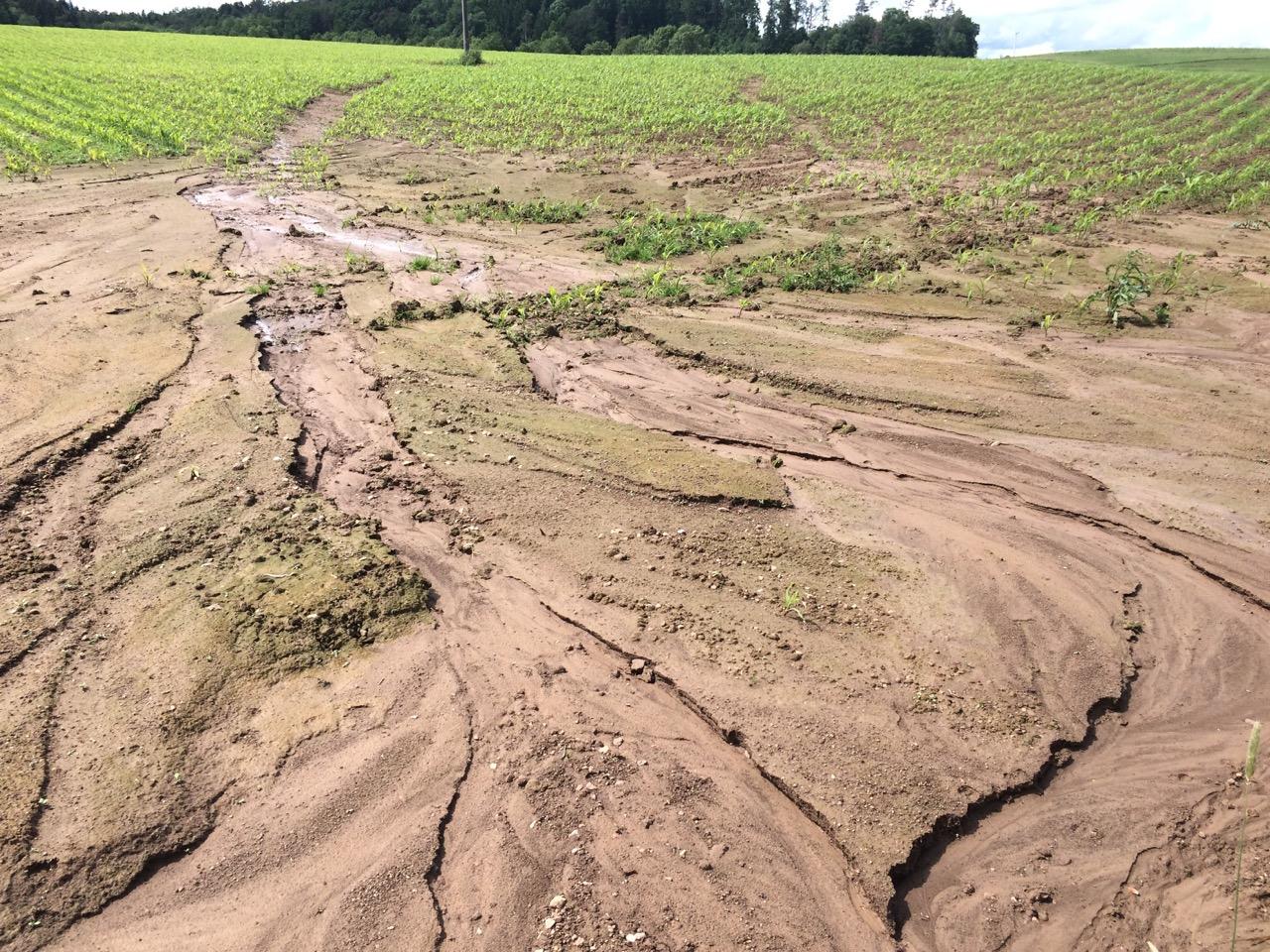 Artikel: Boden- und organische Kohlenstoffverluste durch unterschiedliche Bodennutzung: Eine globale Meta-Analyse