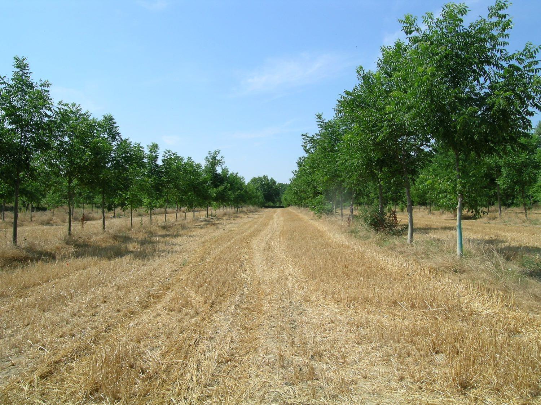 Artikel: Agroforstsysteme der gemäßigten Breiten bieten einen größeren Bestäubungsdienst als Monokulturen