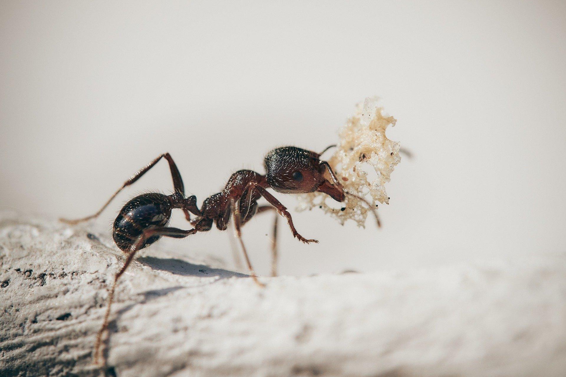 Alarmierende Langzeitwirkungen von Insektengiften auf Ameisen