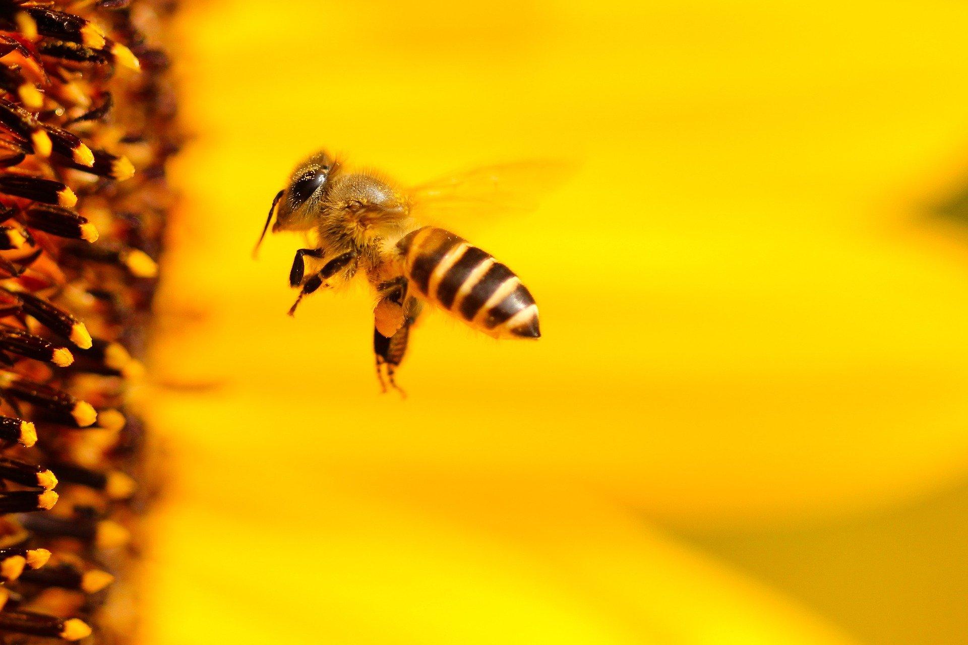 Insektensterben: zu lockere Grenzwerte?