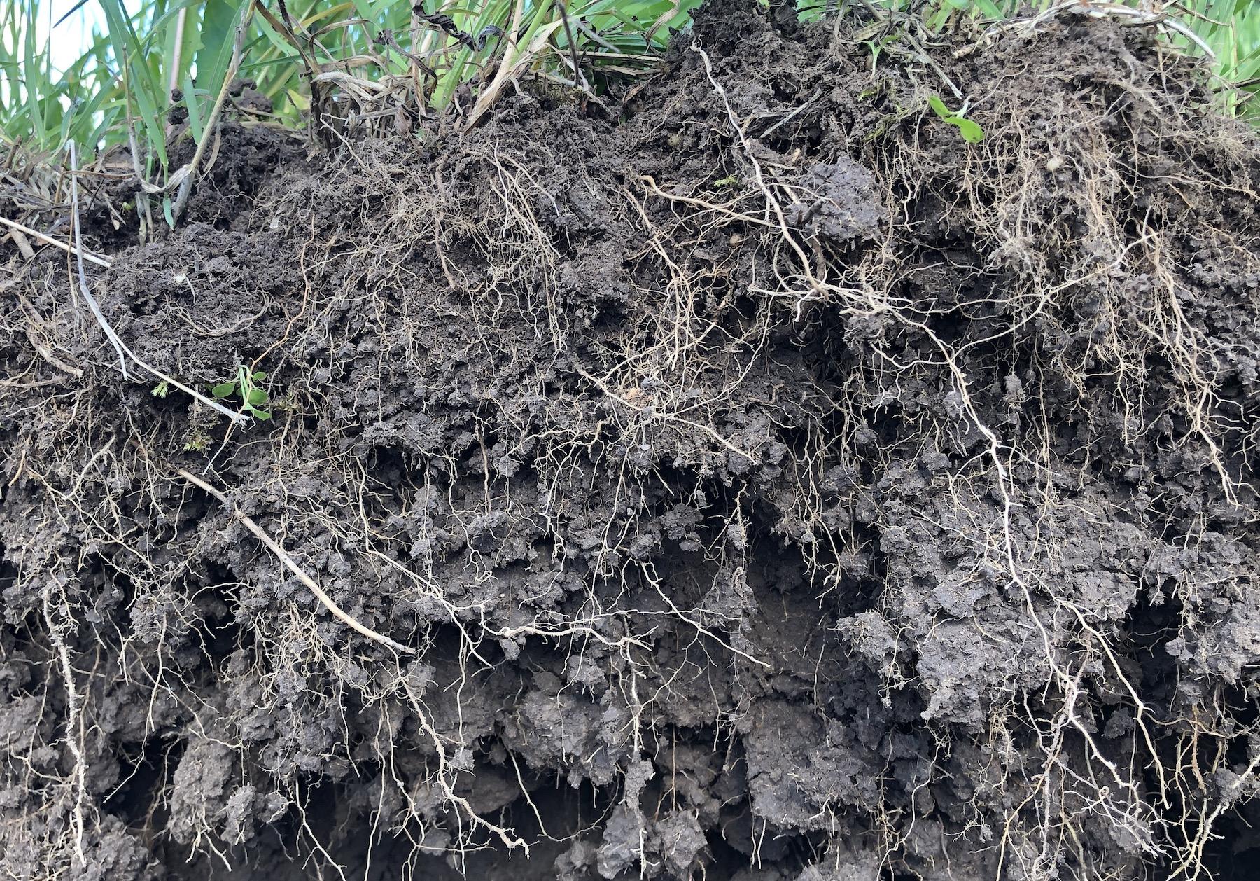 Agrarheute: Regenerative Landwirtschaft – das bessere Bio oder Humbug?