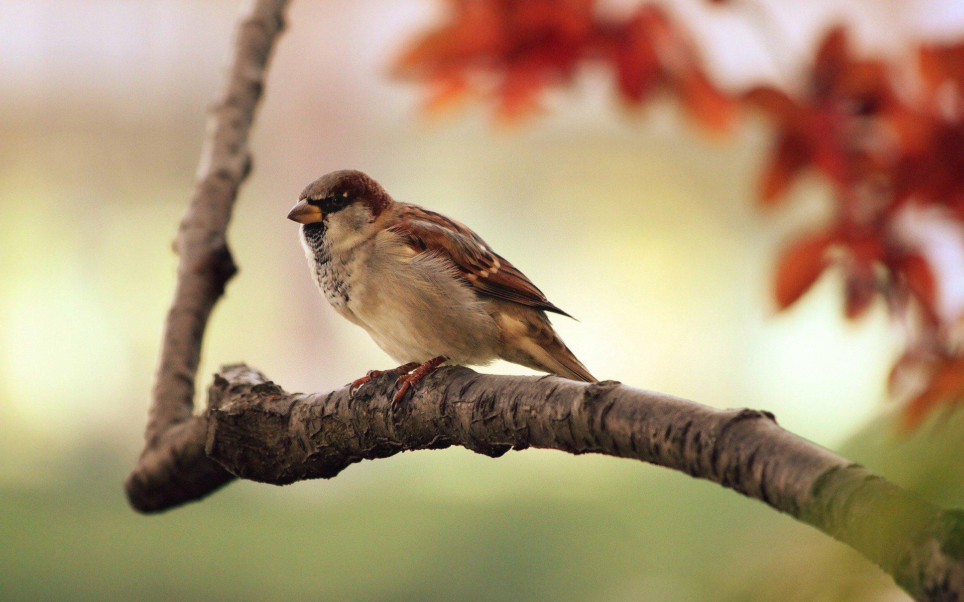 Studie: Vögel sind mit unserem Glücksniveau verbunden
