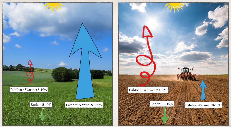 Präsentation: Wasser pflanzen. Mit Vegetation das Klima kühlen. Stefan Schwarzer