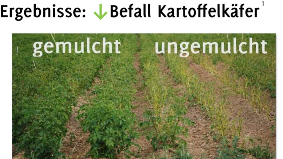 """Morgen in der 6. Webinar-Reihe """"Aufbauende Landwirtschaft"""": Stephan Junge – Das Transfermulchsystem im Kartoffelanbau als Pflanzenschutz- und Klimawandelanpassungstrategie"""